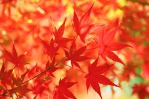 free-photo-autumn-leaves-beiz-l06342